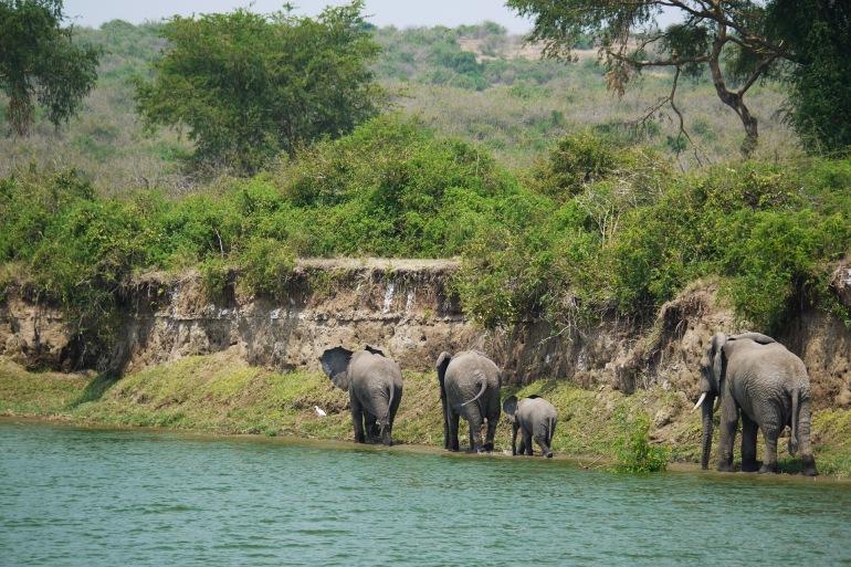 Awesome Queen Elizabeth National Park-Uganda-1535877-P