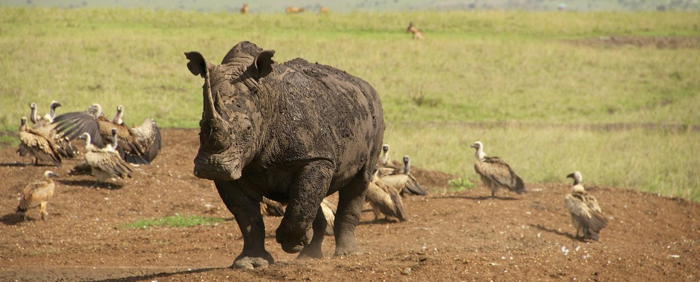 Rhino Kenya Nairobi national park_Kenya_637797_P