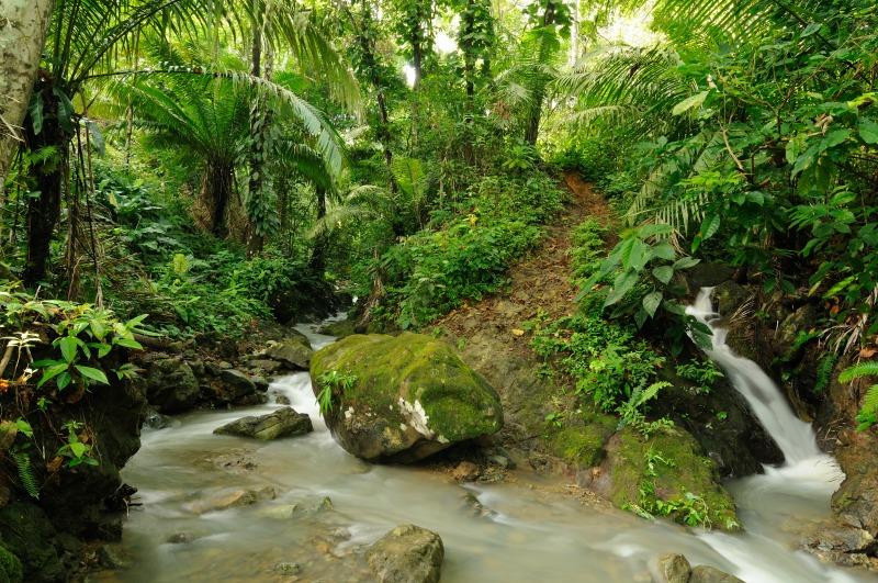 Panama Jungle