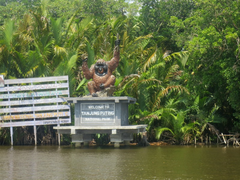Tanjung_puting_national_park
