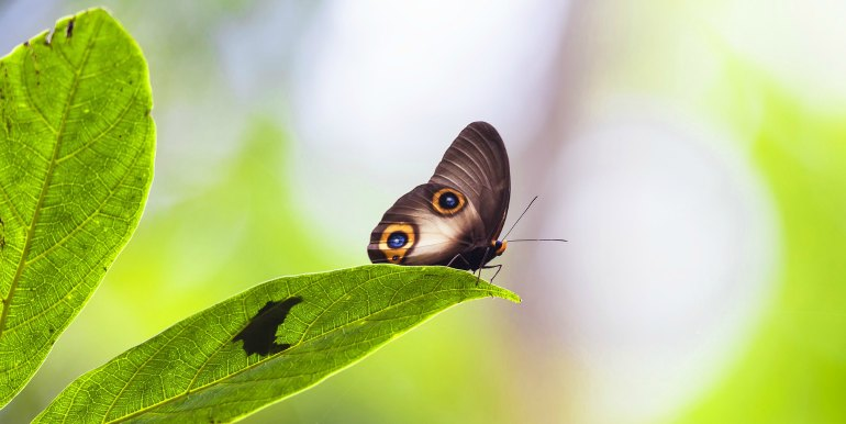 Close up of butterfly in the Amazon