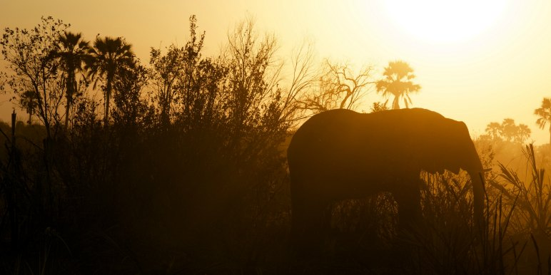 Elephant at dusk in Africa