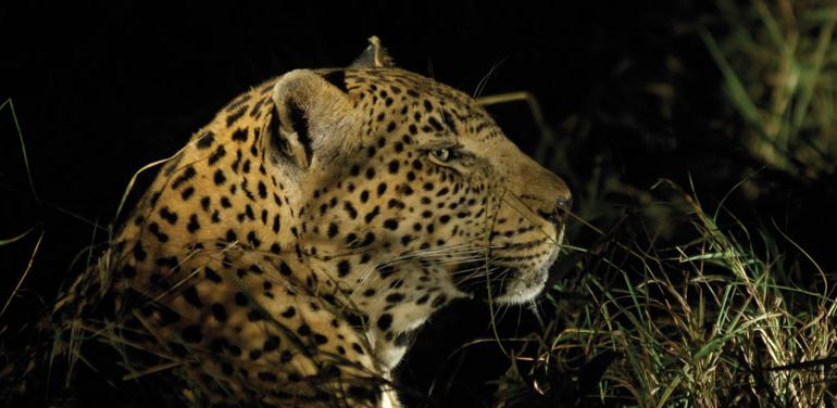 Kruger Experience - Lodge (3 days) tour