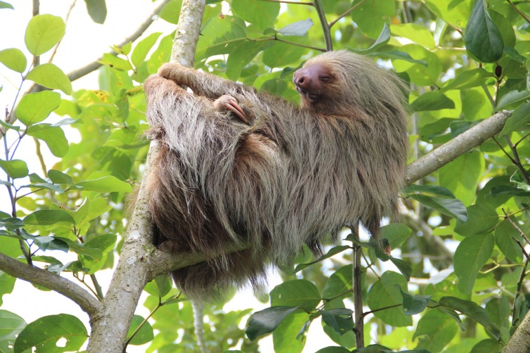 Natural Highlights of Costa Rica tour