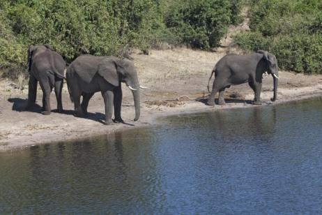 Victoria Falls Safari   Classic Victoria Falls & Zambezi Safari tour