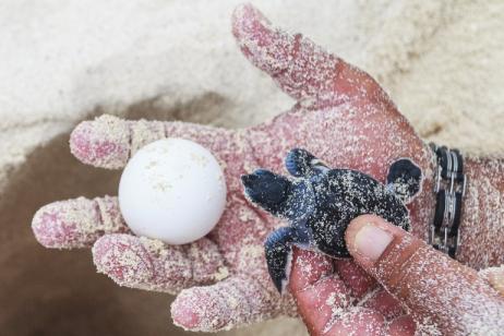 Costa Rica – The Sea Turtle Initiative tour