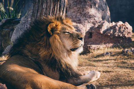 Essence of Tanzania Safari tour