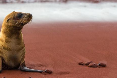 Galapagos Adventure: Northern Islands (Daphne) tour