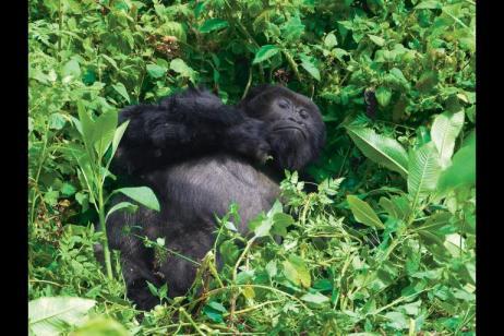 Gorilla Encounter tour