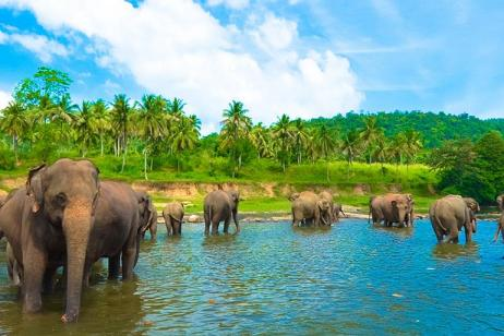 Sri Lanka Family Holiday tour