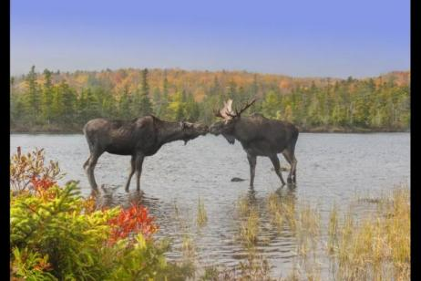 French Canada, Eastern Seaboard and Cape Cod tour