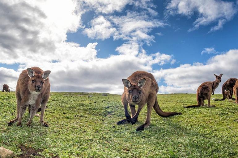 Wildlife and Wonders of Australia tour