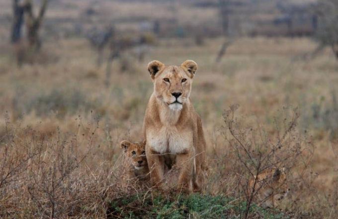 Northern Tanzania Safari Circuit In-Style tour