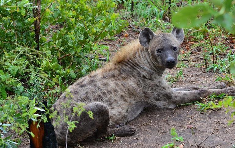 Cape Town Pretoria  Kruger, Falls & Cape Town Trip