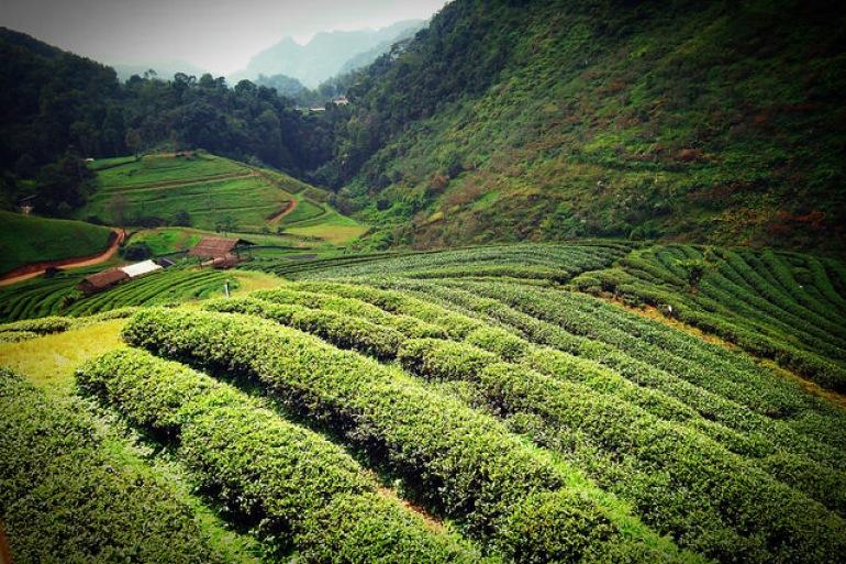 Herbs Garden-Thailand-p