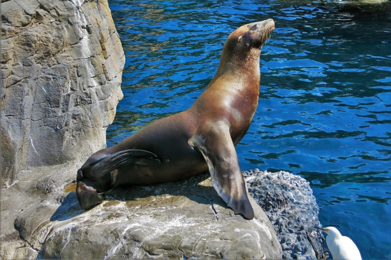 Sea Lion on the Island-Cape Town_1640531_P