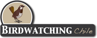 birdwatching chile logo