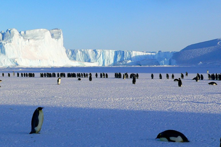 Penguins on Antarctic desert