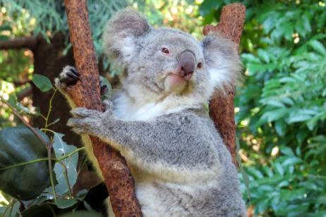 Exploring Australia & New Zealand tour