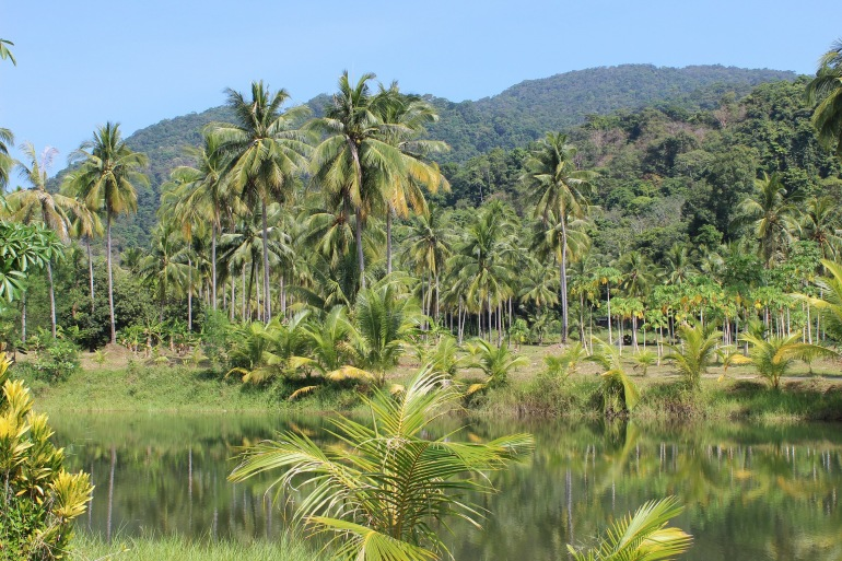 Palm tress in rainforest-Amazon-273780-p