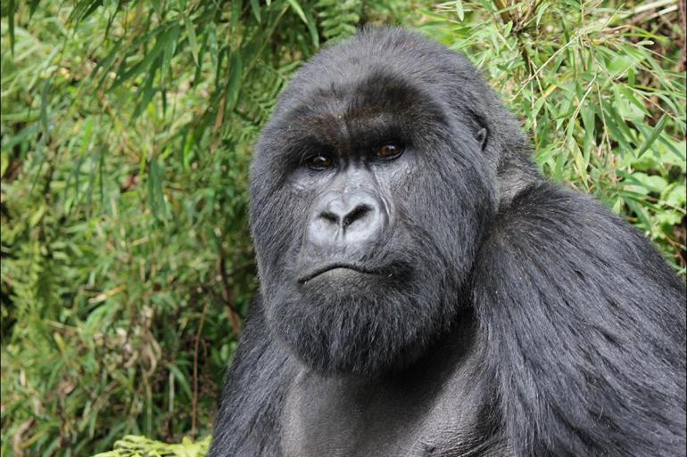 Dar es Salaam Kampala Gorillas, Game Parks & Beaches Trip