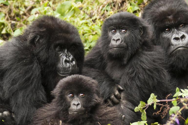 Remarkable Rwanda & Gorillas of Uganda tour