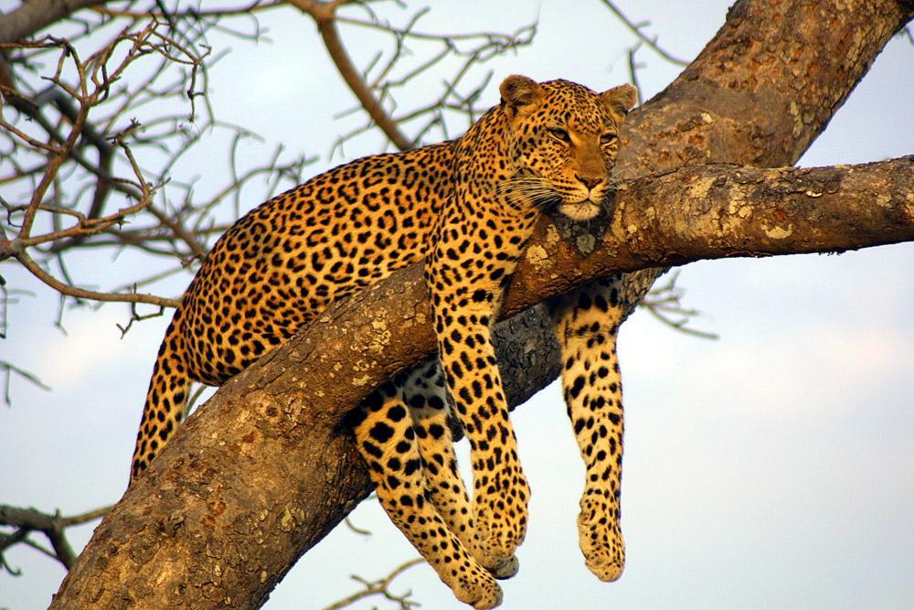 Arusha Kigali Serengeti & Silverbacks Trip