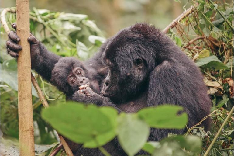 Dar es Salaam Kampala Gorillas to Vic Falls Trip