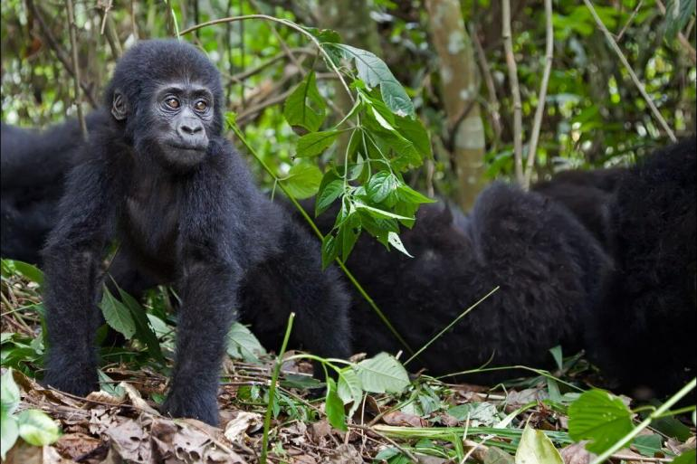 Cultural Relaxing Retreat Mountain Gorillas of Rwanda package