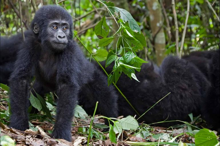 Cultural Culture Mountain Gorillas of Rwanda Experience – Independent package