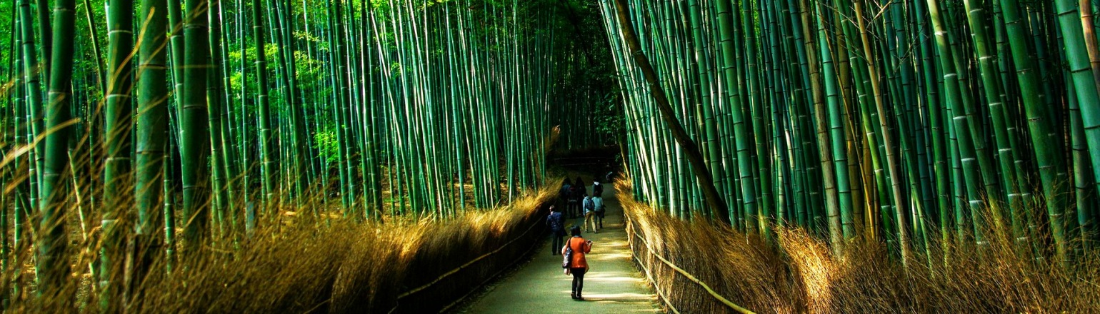 Bamboo forest in Kyoto Japan guided tours