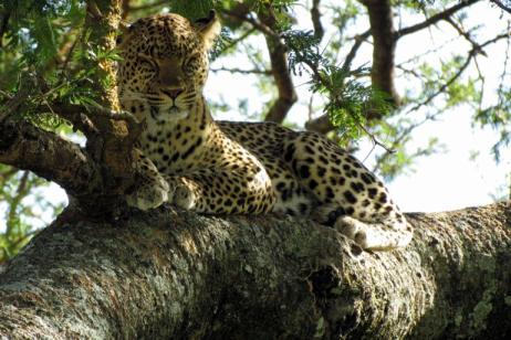 Tanzania: Birding Among the Beasts tour