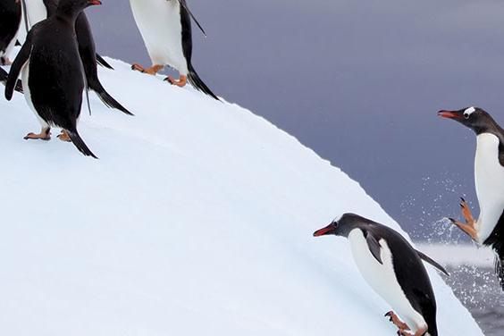 Antarctic Express: Fly the Drake (Sea Adventurer) 2016 - 2017 tour