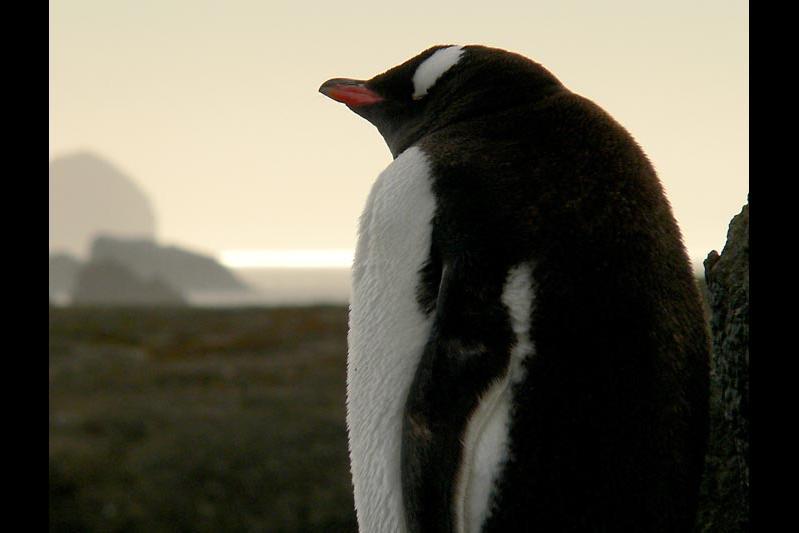 Antarctic Peninsula Patagonia Antarctic Express: Fly the Drake (Sea Adventurer) 2016 - 2017 Trip