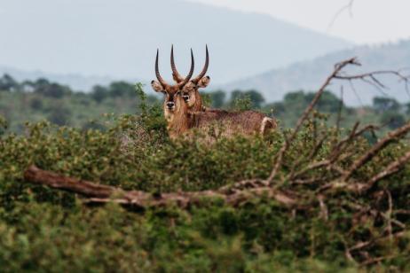 South Africa & Mozambique Safari tour