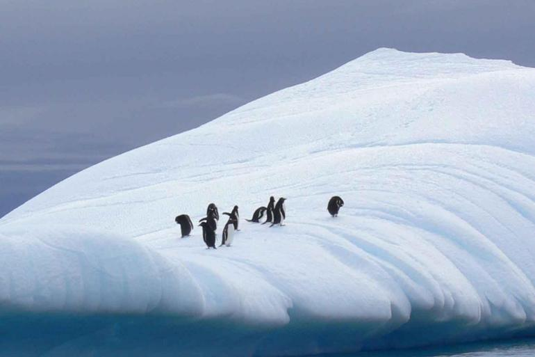 Discover Antarctica tour