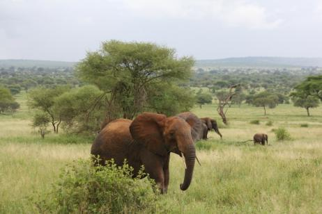 Big Five Safari tour