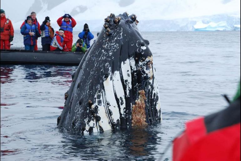 Antarctic Peninsula Ushuaia Discover Antarctica Trip