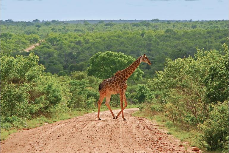 Johannesburg Kruger National Park Wild Kruger Camping Trip