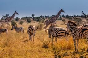 Cape Town & Safari Express tour