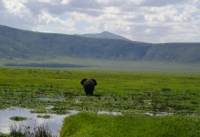 Ngorongoro Crater Attractions