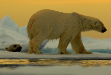 Arctic Attractions