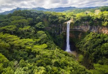 Jungle & Rainforest Attractions