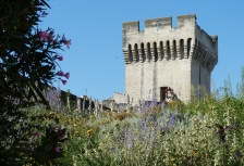 Avignon Attractions