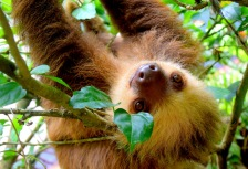 Costa Rica Rainforest Tours Attractions