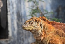 Top Tours to the Galapagos Attractions