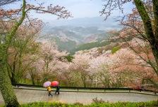 Nara Attractions
