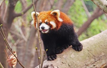 Chengdu Attractions
