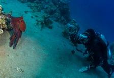 Scuba Diving & Snorkeling Attractions