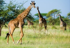 Africa: National Geographic Traveler's Top Tours of a Lifetime 2014 Attractions
